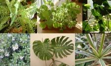 Plantas dentro de casa – Folhagens e flores (Pt. 2)