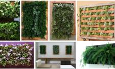 Quadro vivo de plantas