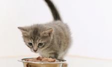 Petiscos caseiros para seu gato