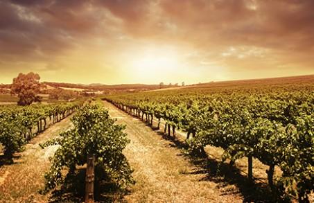 Enoturismo – aproveitando viagem e vinhos de uma só vez!