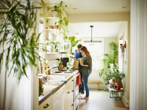 Plantas dão um ar mais leve para a casa inteira